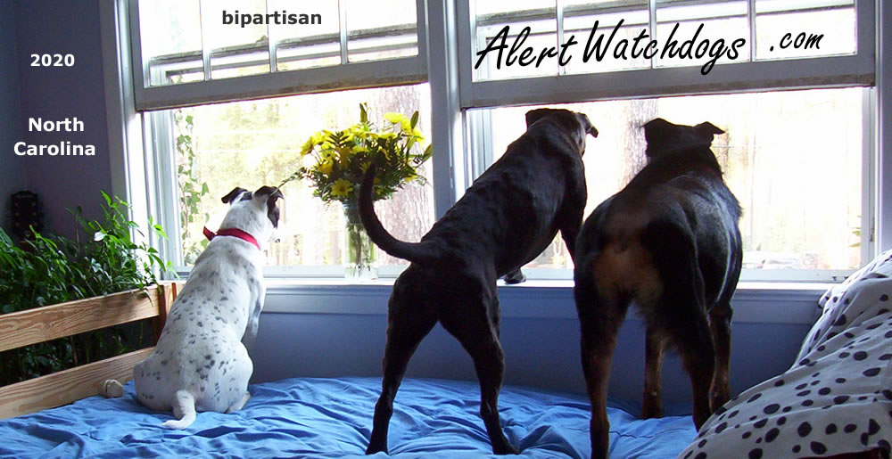 Alert Watchdogs 2020